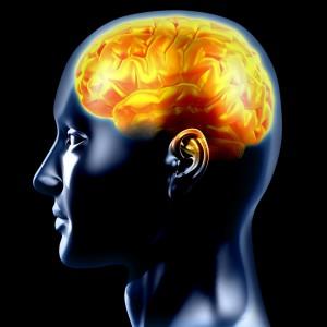 NEUROSCIENCES • Et le génie jaillit du cerveau